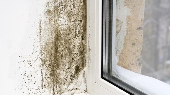 Plísně mikroskopické vláknité houby na zdi