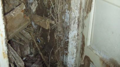 Dřevomorka domácí