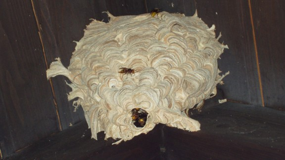 Sršní hnízdo